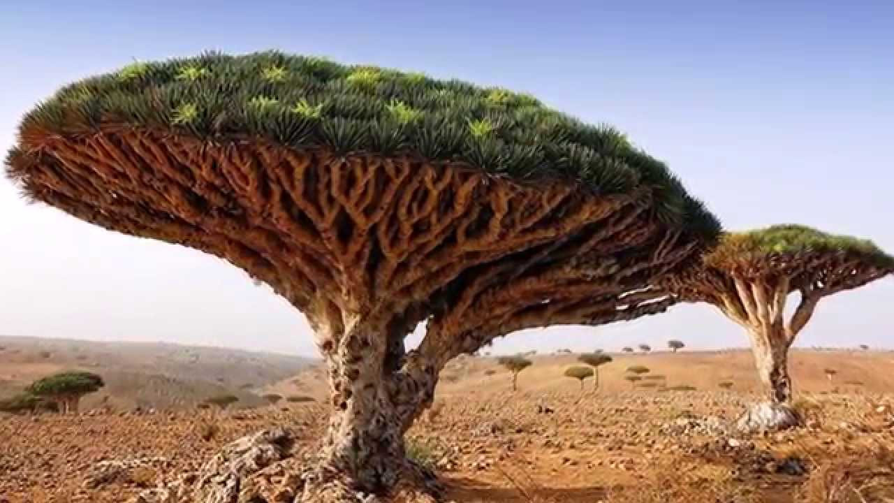 اليمن يملك 2,836 نوع من النباتات